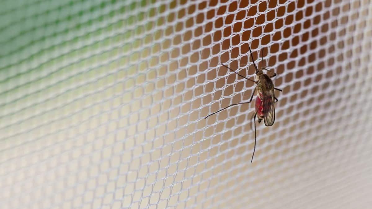 Best Hammock Bug Net Review